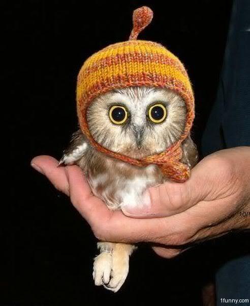 Buzón italiano~ [Lovi] Cute-owl