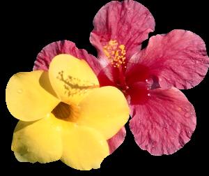 Flower mix 0001F005