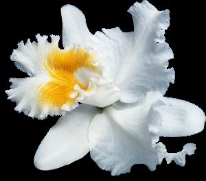 Flower mix 0044F001