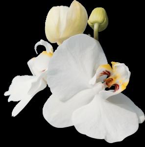 Flower mix 0044F002