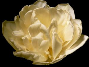 Flower mix 0231F002