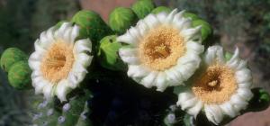 Flower mix F19008