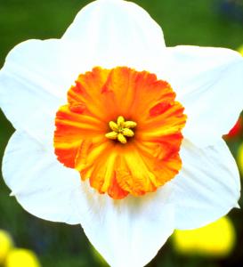 Flower mix F258012