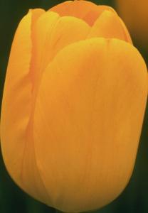 Flower mix F258064