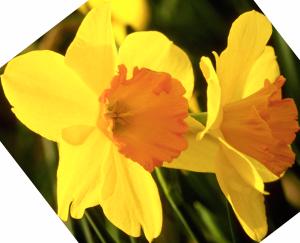 Flower mix F286024