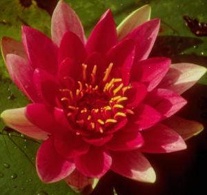 Flower mix F298031
