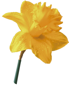 Flower mix F674002