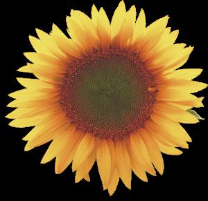 Flower mix F674004