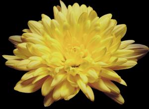 Flower mix F674062