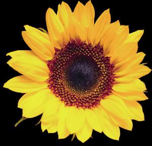 Flower mix F674063