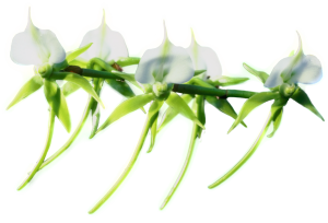 Flower mix F115001
