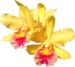 Flower mix F115013