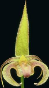 Flower mix F115017