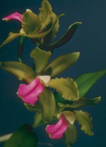 Flower mix F115023
