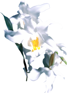 Flower mix F115036