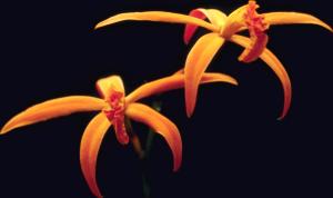 Flower mix F115063