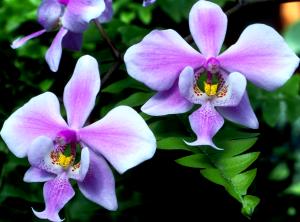 Flower mix F115091