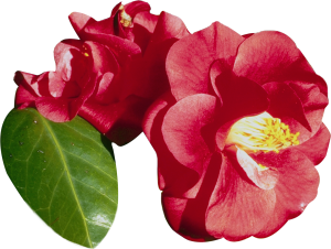 Flower mix F124024