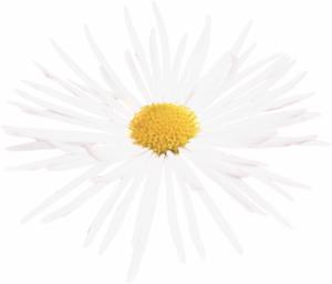 Flower mix F124050