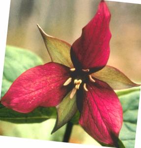 Flower mix F127002