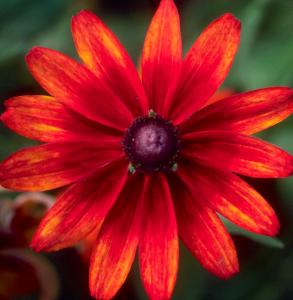 Flower mix F132079