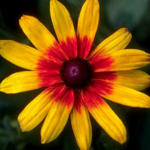 Flower mix F132080