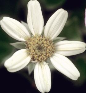 Flower mix F132085