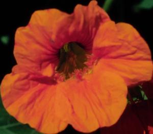 Flower mix F132090
