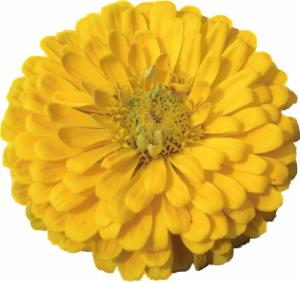 Flower mix F132099