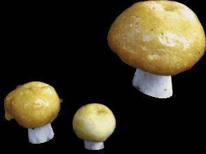 Mushrooms various F674027