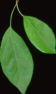 Trees, leaves & various F318013