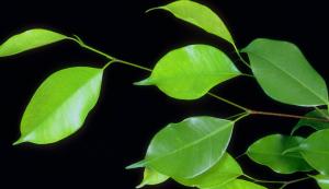 Trees, leaves & various F318039