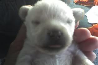 Cute puppy pic :D Buddyoneweekold