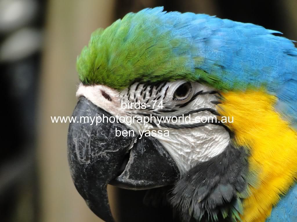 கவலை மறக்கும் காட்சிகள் அழகிய பறவைகள் சில.. - Page 2 Birds-74