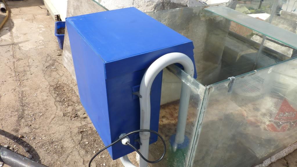 Reinicio la fiebre con nuevo acuario P1030138