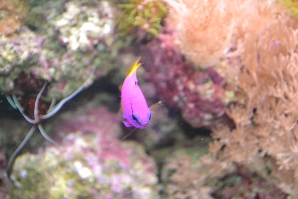"""Concours photos """"le poisson et son environnement aquatique"""" - Oscar le poisson  - Page 3 DSC_1089"""