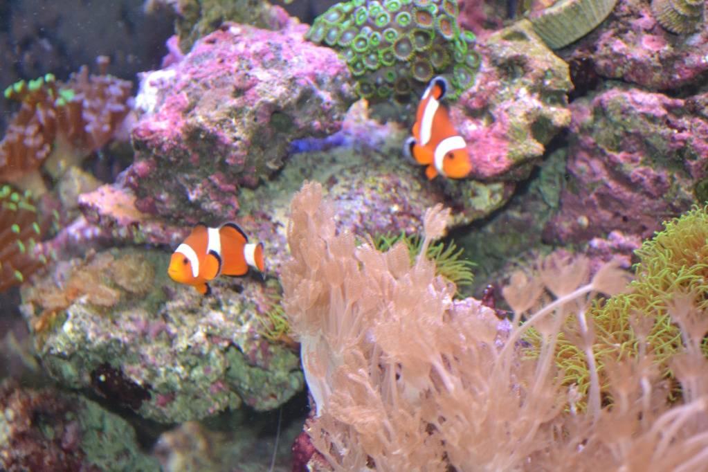 """Concours photos """"le poisson et son environnement aquatique"""" - Oscar le poisson  - Page 3 DSC_1404"""