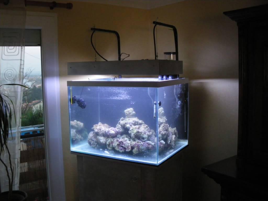aquarium eau de mer - Page 3 IMGP1677