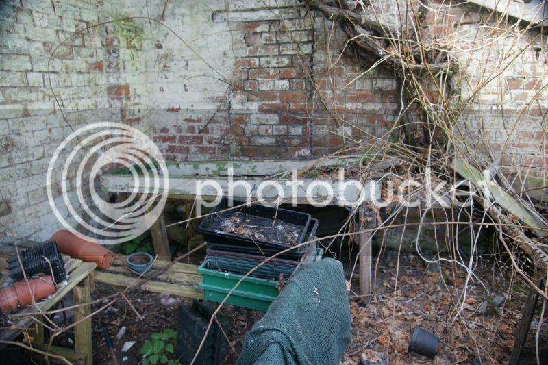 Greenhouse renovation DSC04497_zps8pawyhsp