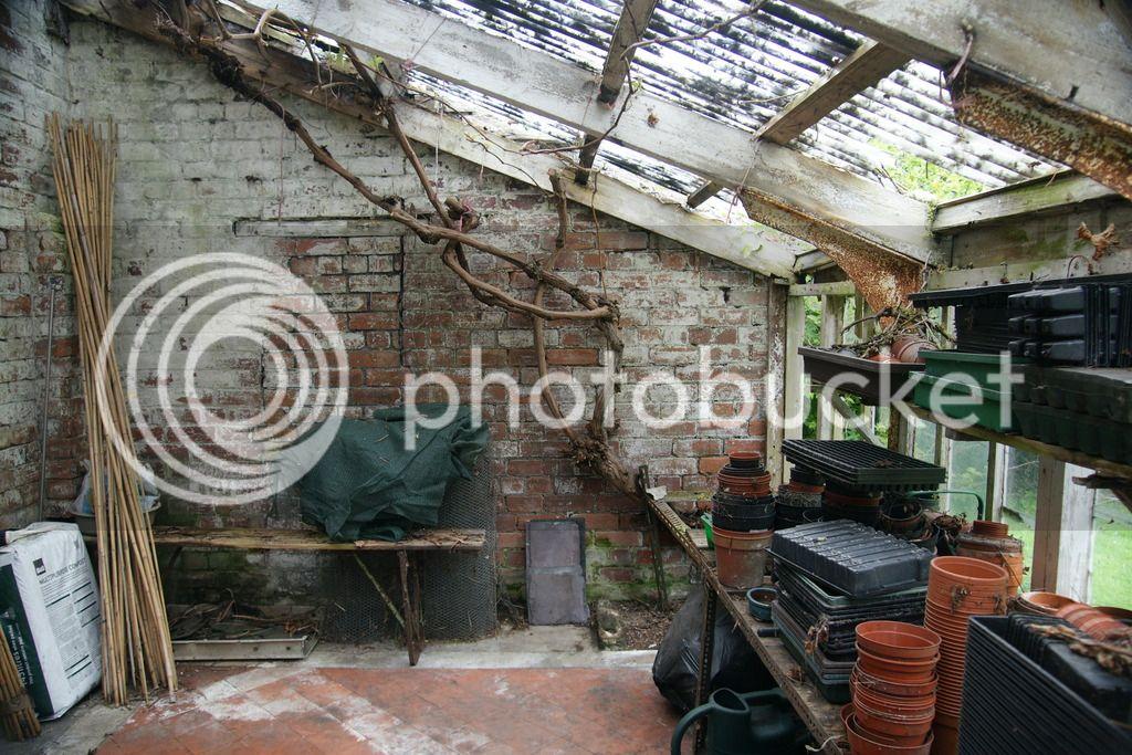 Greenhouse renovation DSC04507_zpsnv9d7utv