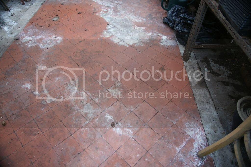Greenhouse renovation DSC04508_zpsf2wpgfyd
