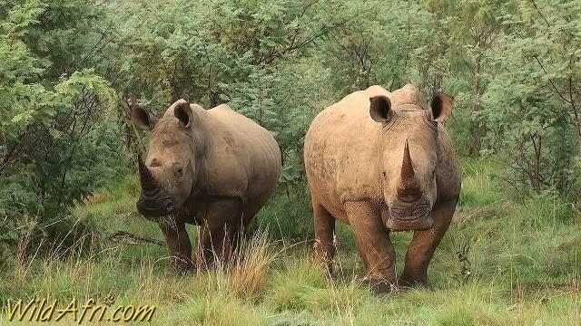 The Poached White Rhino AAA_20100021_0119