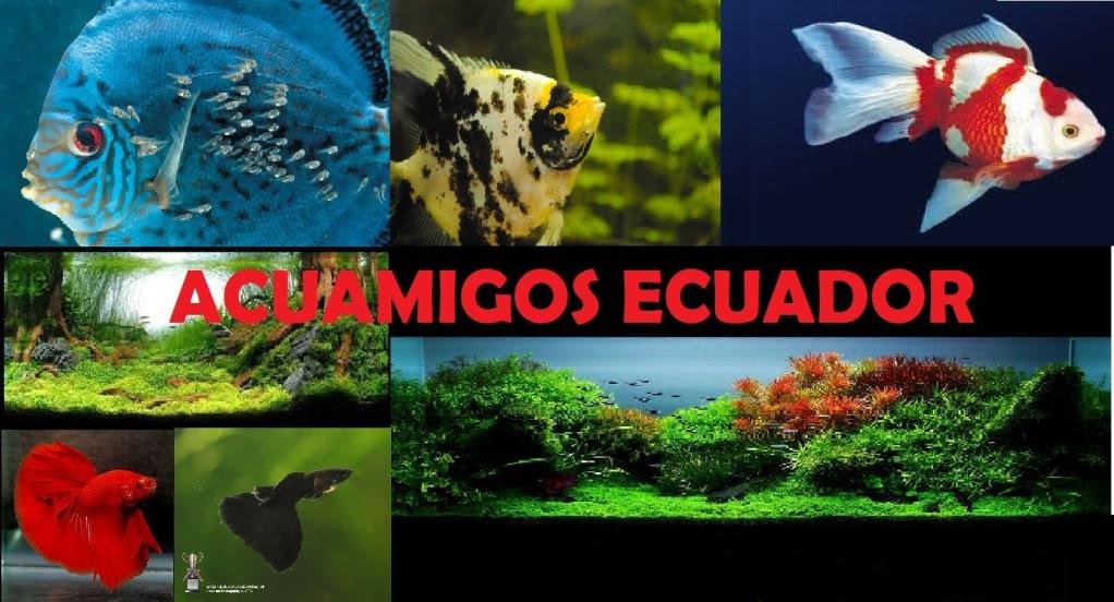 Foro gratis : ACUAMIGOS ECUADOR - Portal ACUAMIGOSECUADOR-1