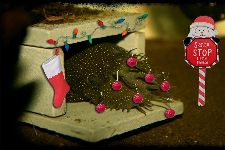 Christmas POTM Contest... Xmasplec