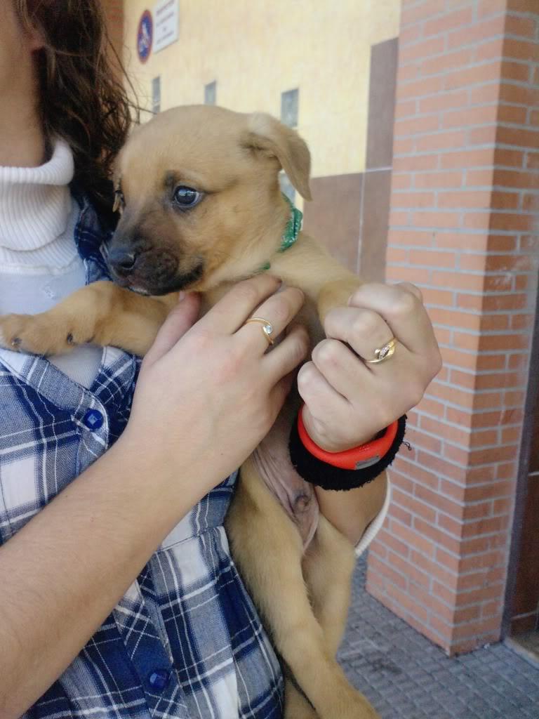 Cachorro abandonado en MURCIA B