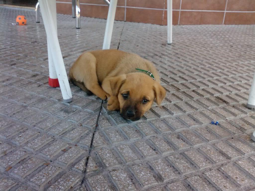 Cachorro abandonado en MURCIA C