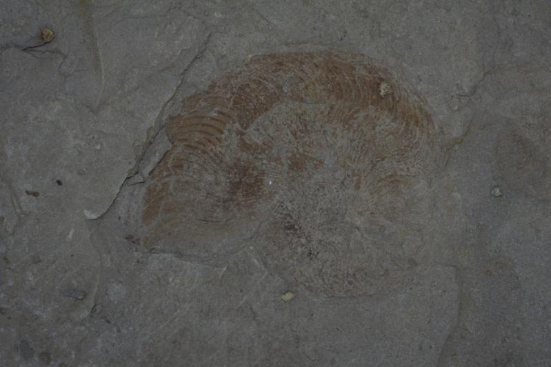 Escapade géologique dans les argiles bitumeuses de la Moselle. 10juillet2010Beuvangezoneindustrielle18FILEminimizer