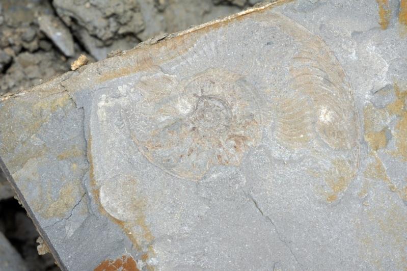 Escapade géologique dans les argiles bitumeuses de la Moselle. 10juillet2010Beuvangezoneindustrielle22FILEminimizer