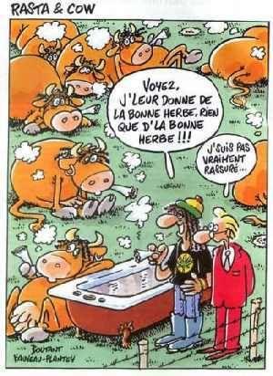 actualité Vache10061
