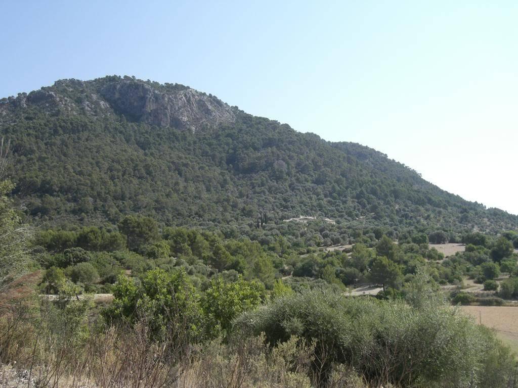 Finca es Castell CIMG0495